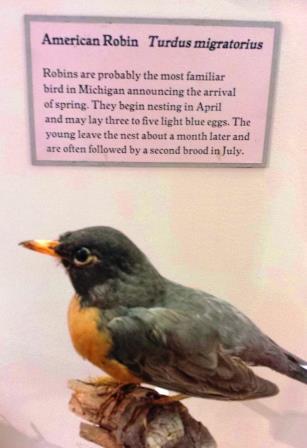 Robin 03-25-16