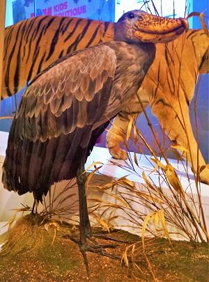 royal-ontario-museum-toronto-2016-61