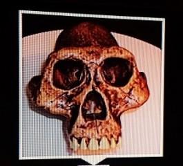 lucy-skull-resized