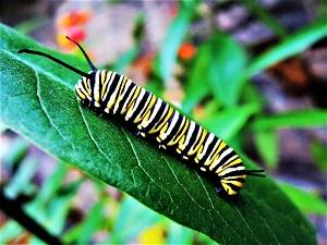 Caterpillar, Photo by Skeeze, Pixabay