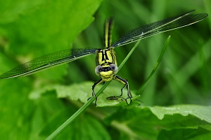 Dragonfly, Photo by Katja, Pixabay