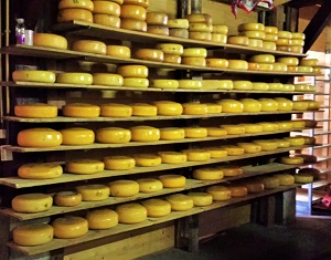 3-Aging Gouda in Amsterdam, Photo by cjverb (2014)