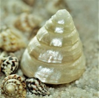 Mother-of-Pearl Shell by cocoparisienne, Pixabay