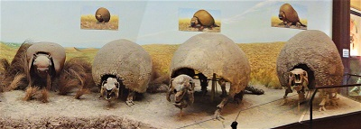 Glyptodon, Photo by André Ganzarolli Martins, Museo de La Plata, Argentina, Wikimedia Commons