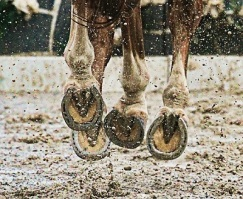 Horse Hooves, Photo by secarter, Pixabay