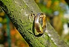 Ring, Photo by Teodor, Pixabay-100px