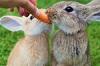 Bunnies, Photo by Thomas_G, Pixabay-100px