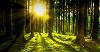 Forest by jplenio, Pixabay-100px