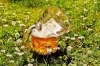 Crumpled Beer Mug with Flowers, Photo by Alexas Fotos, Pixabay-600px