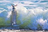 Dog Splash by Ulrike Mai, Pixabay-200px